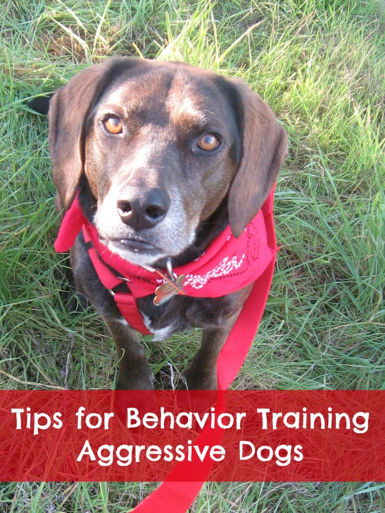 Training Aggressive Dogs
