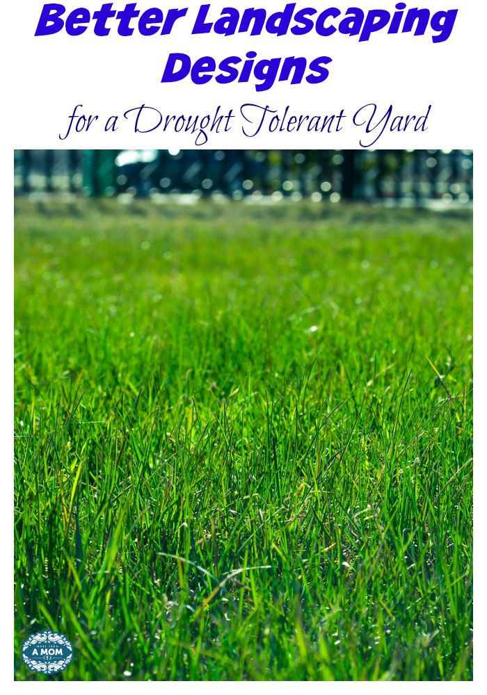 Better Landscaping Designs for a Drought Tolerant Yard