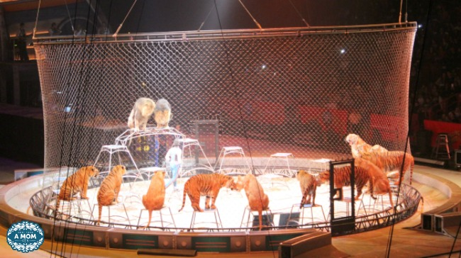 Ringling Bros. Barnum & Bailey out of this world lions.